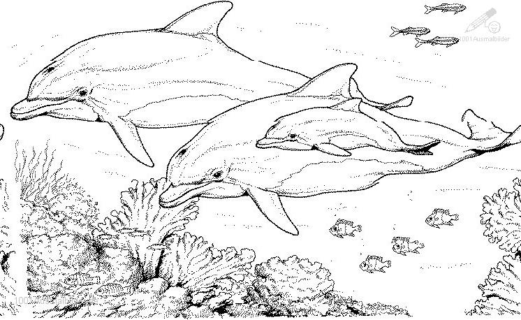 malvorlage: delphin-Malvorlage-10