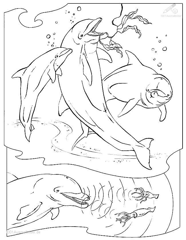 malvorlage: delphin-Malvorlage-17