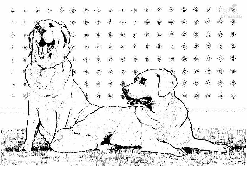 Malvorlage 2 Hunden