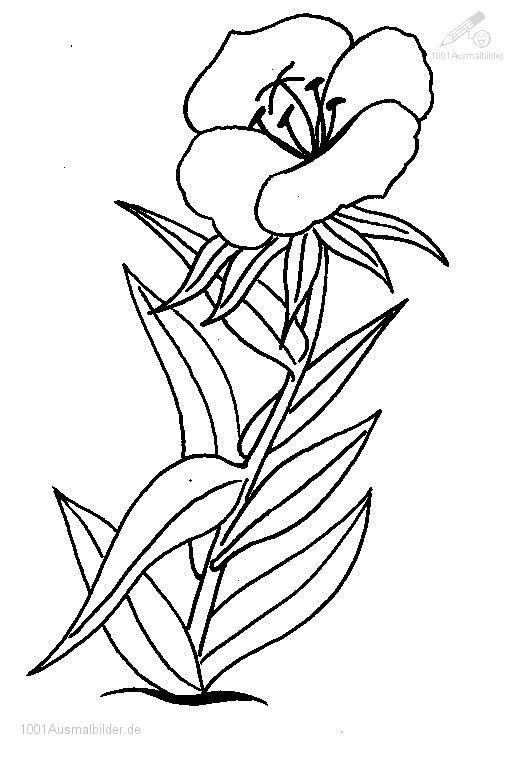 Blumen Malvorlage