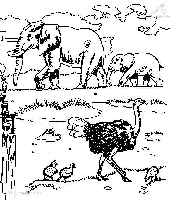 malvorlage: malvorlage-elefant-4