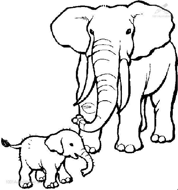 malvorlage: malvorlage-elefant-6