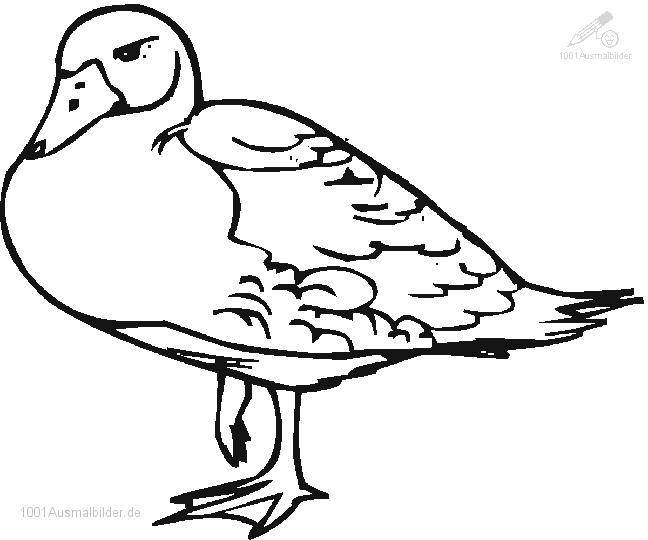 1001 Malvorlagen Tiere Ente Malvorlage Ente