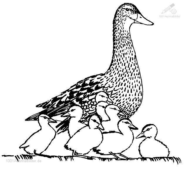 Tiere >> Ente >> Ente Mutter