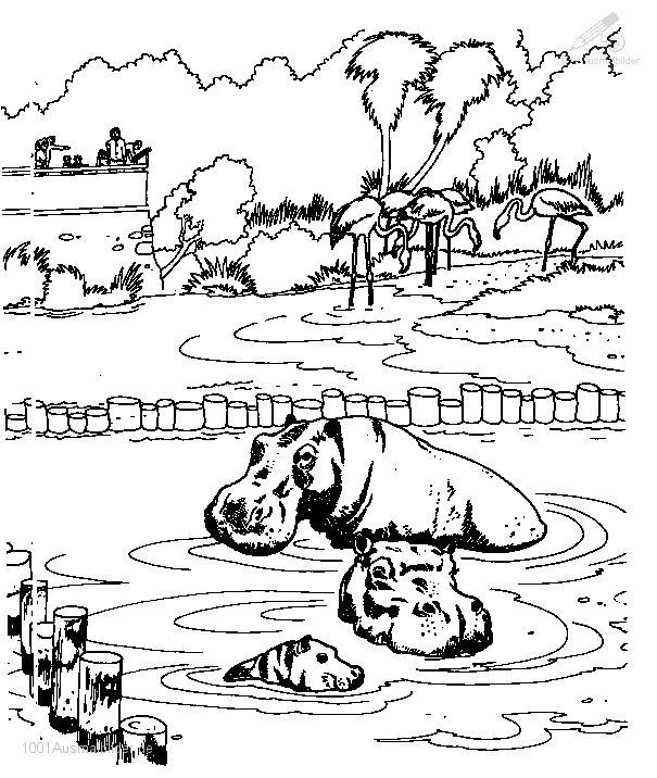 Malvorlage Flusspferd