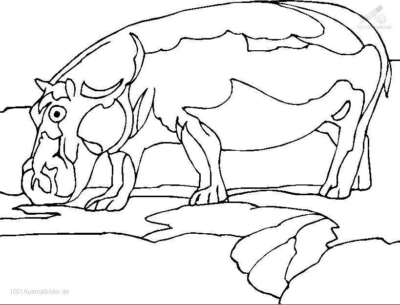 malvorlage: malvorlage-flusspferd-18