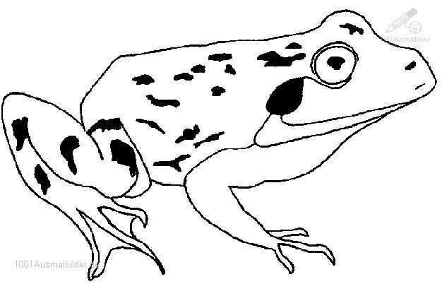 malvorlage: malvorlage-frosch-5