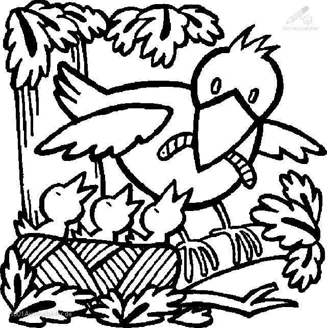 Malvorlage Fruhling Vogel
