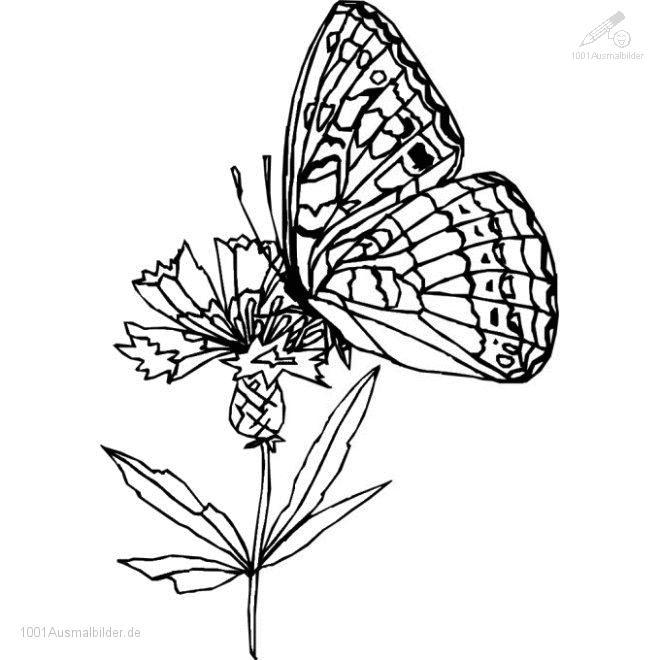 Malvorlage,Schmetterling