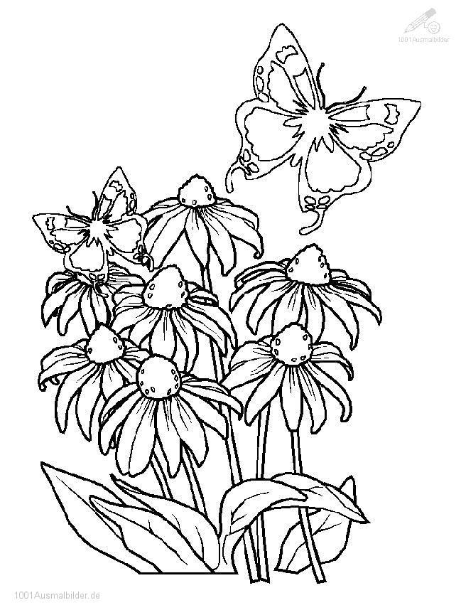 Malvorlage Fruhling Blumen