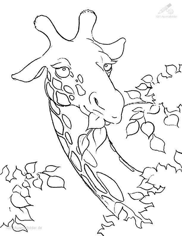 malvorlage: malvorlage-giraffe-4