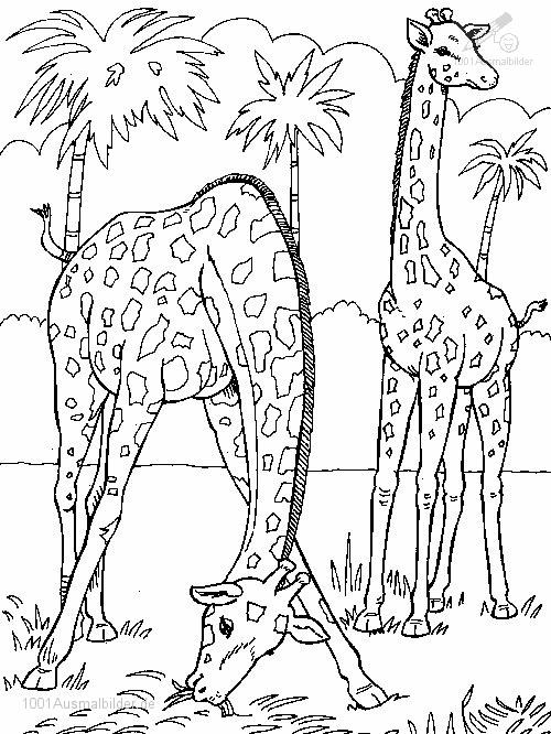malvorlage: malvorlage-giraffe-8