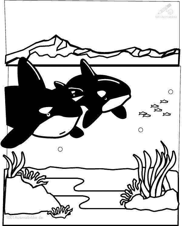 Malvorlage Haie