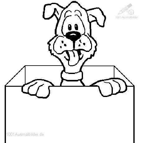 Suprise Hund