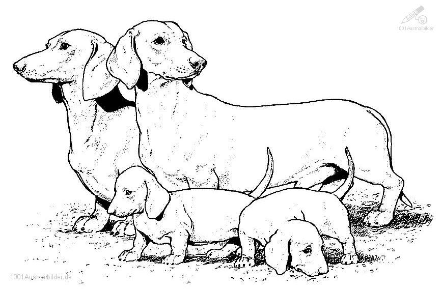 Hund mit Puppys