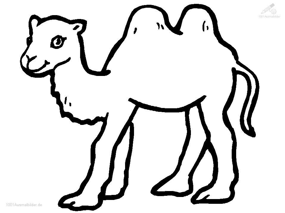 malvorlage: malvorlage-kamel-1
