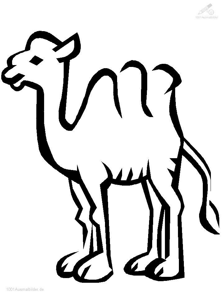 Malvorlage Kamele