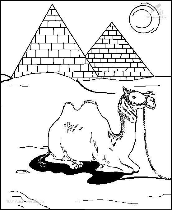 Kamel Agypten