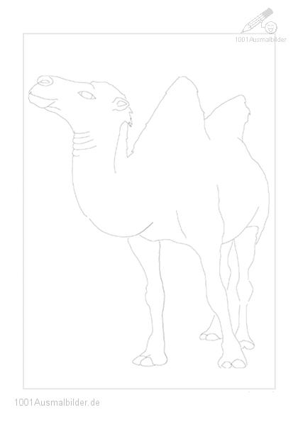malvorlage: malvorlage-kamel-4