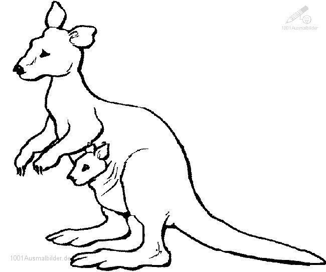 Kanguru Malvorlage