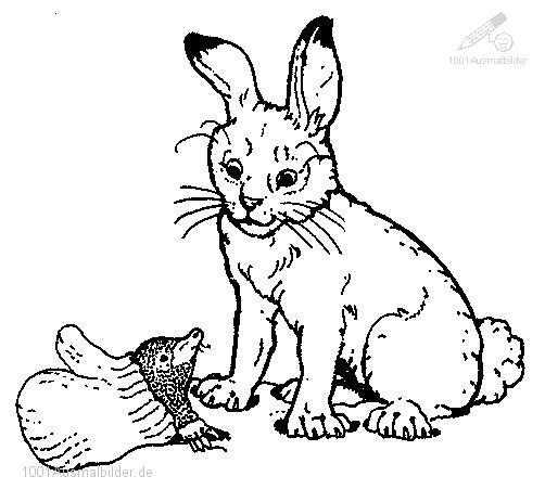 malvorlage: malvorlage-kaninchen-1