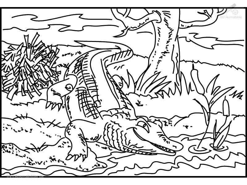 malvorlage: malvorlage-krokodil-5