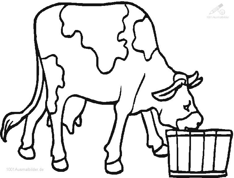 Malvorlage Trinkende Kuh