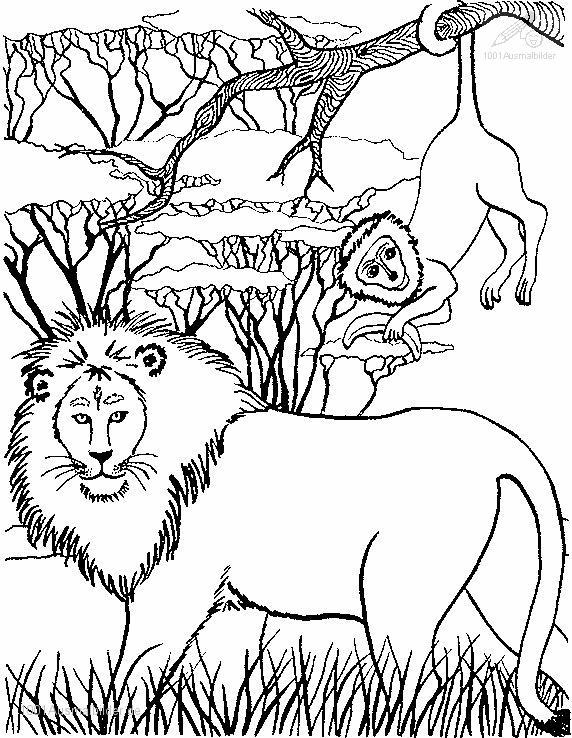 1001 Malvorlagen Tiere Lowe Lowe Aus Afrika