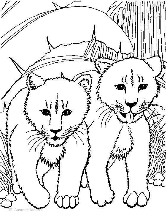 1001 MALVORLAGEN : Tiere >> Lowe >> Malvorlage Junge Lowe