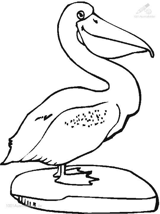 Malvorlage Pelikan