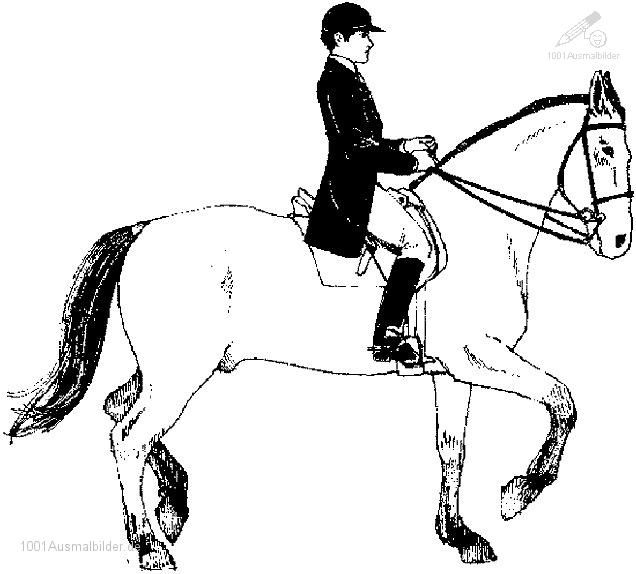 Pferde Malvorlage   Heimwerker.de