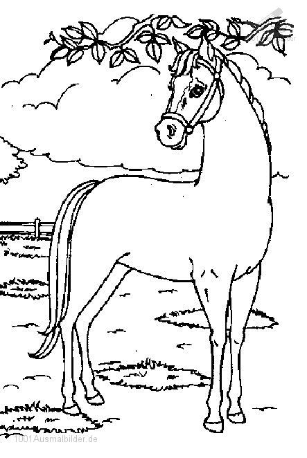 malvorlage: malvorlage-pferd-14