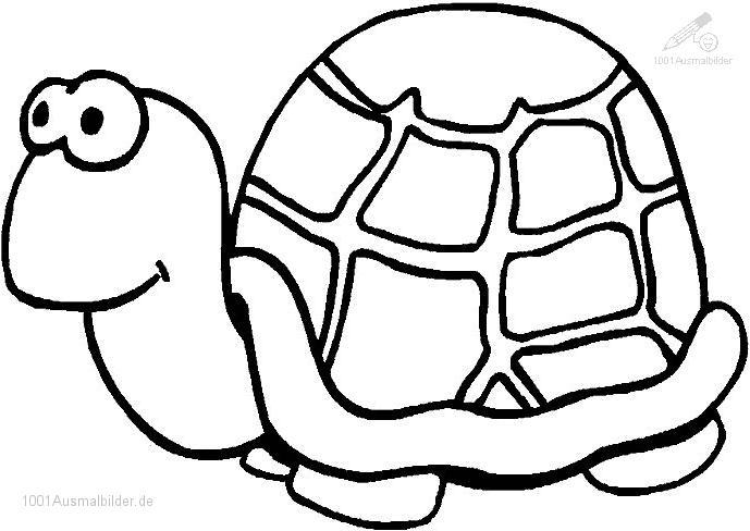 malvorlage-schildkrote-11.jpg (689×488) | Vorlagen | Pinterest ...