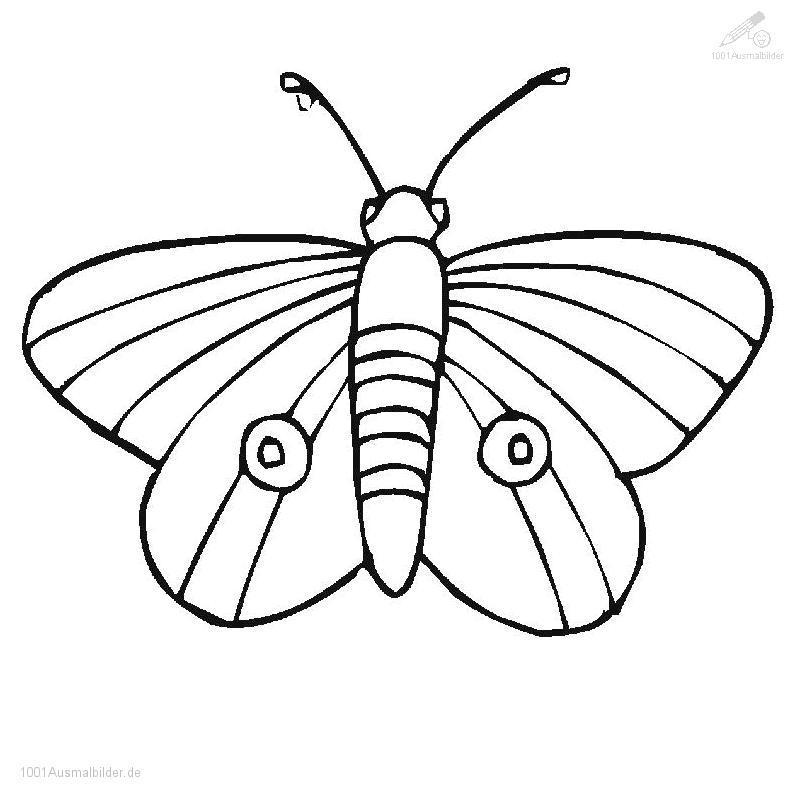 1001 Malvorlagen Tiere Schmetterling Schmetterling Malvorlage