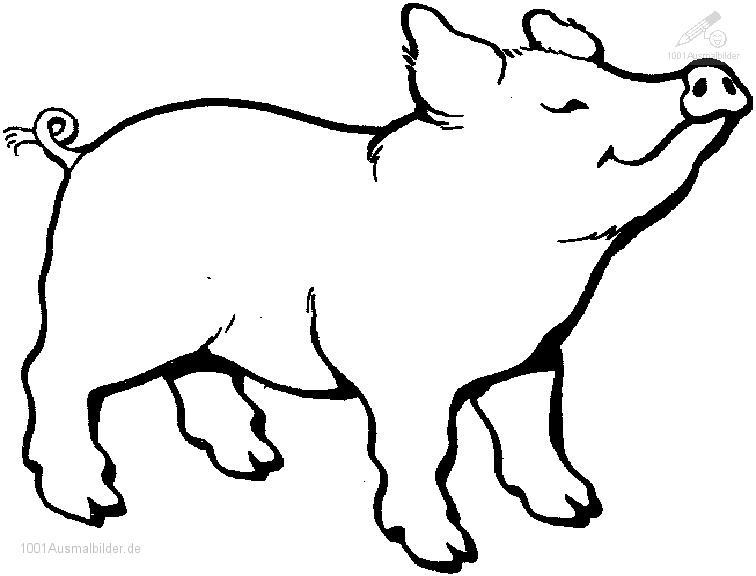 Malvorlage Schwein