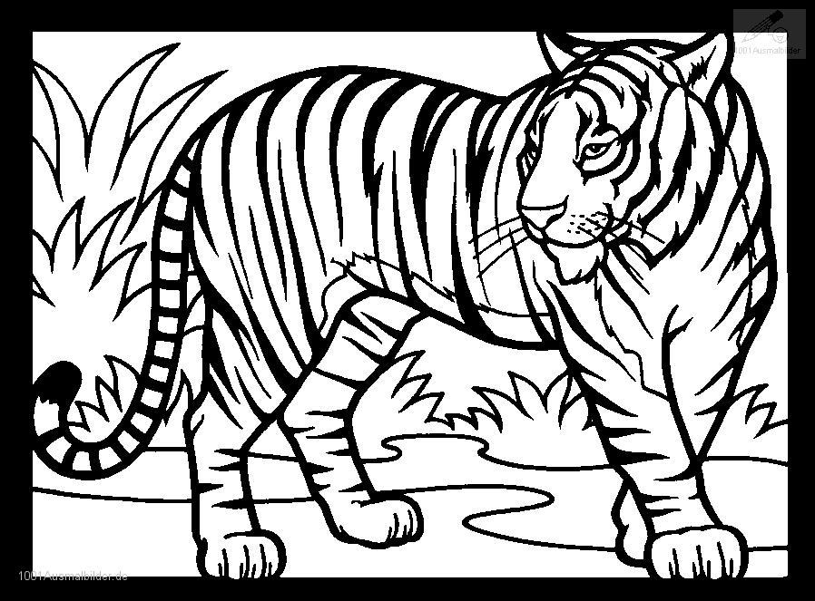 Tiere gt gt tiger gt gt malvorlage tiger
