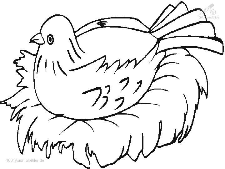 Malvorlage Vogel Am Nest