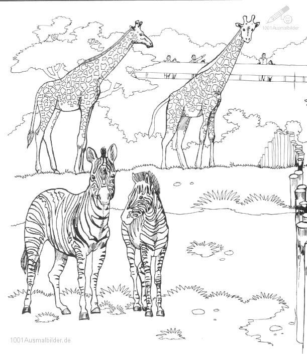 Malvorlage Zebra