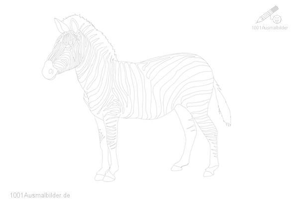 malvorlage: malvorlage-zebra-2