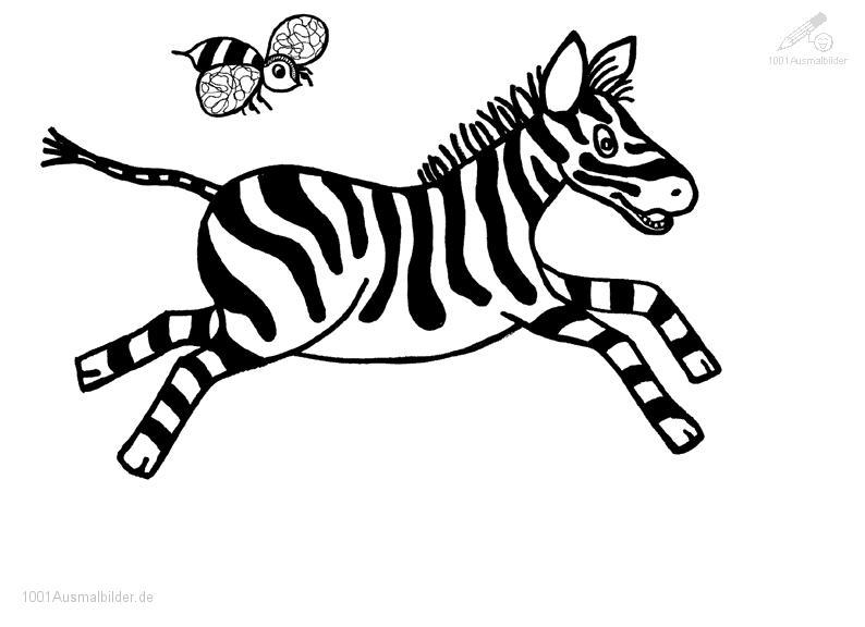Tanzende Zebra