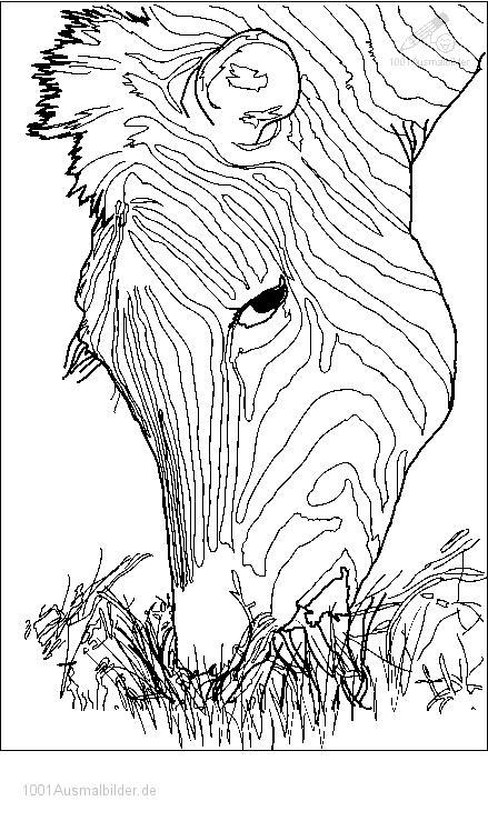 Malvorlage Zebra Kopf