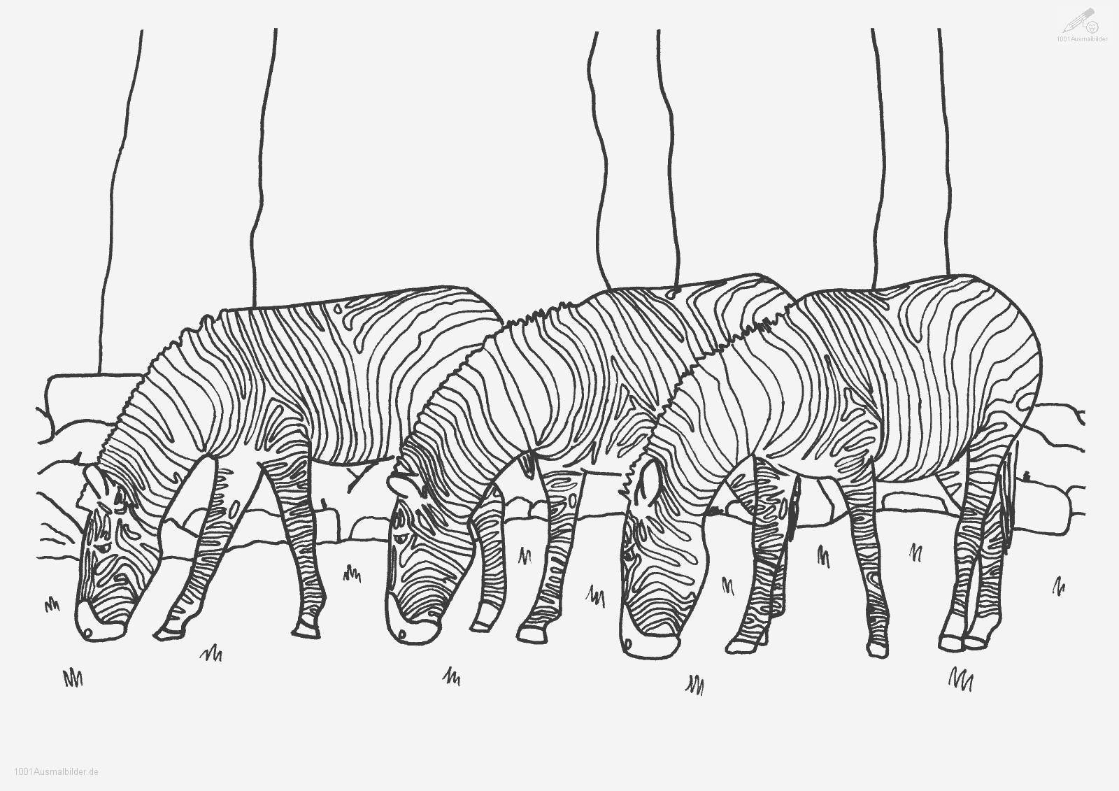 malvorlage: malvorlage-zebra-6