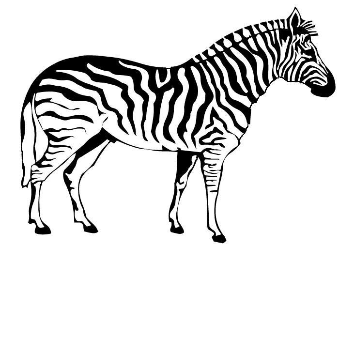 malvorlage: malvorlage-zebra-7
