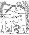 Malvorlage Flusspferd >> Malvorlage Flusspferd